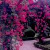 rosegardenfrance
