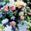roses12