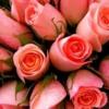 Rose-Farming