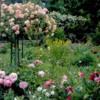 rosesgiverni