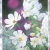 flowerswhite2