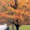autumntreee2