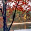 autumntreee3