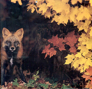 Animals That Change Colour With The Seasons Givnology Wellness Arts