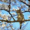 blossomcat