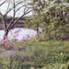 blossomlandscape