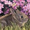 bunnypinkflowers