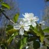 DSC01025: Spring in Belgium