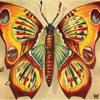 Autumn-Butterfly-06