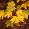 autumnleaves2