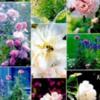 flowerssummer