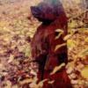 autumnbear