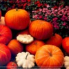 halloweenpumpkins2