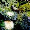 flowercabbagge2