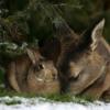 deer-bunny11