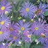 autumnflowers2
