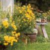 chrysanthemums3