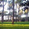 Villa_Glori_pini