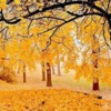 autumnesto