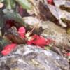 redflowerrock