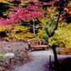 autumntree2