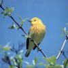 BIRDYELLOW