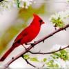 birdie1