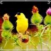 birdie8