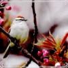 birdie10