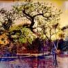 treeboab