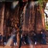 treemontezuma